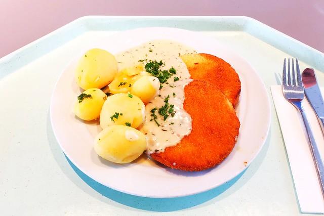 Blumenkohl-Käse-Medaillions mit Salzkartoffeln & Kräutersauce [16.08.2017]